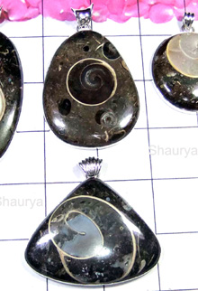 W2GCF999-250 gm- Exclusive 925 Silver Colus Fossil Pendants